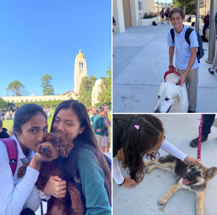 "Bishop's students love their pets; among the furry friends present were snakes, birds, a rabbit, and even a hedgehog! From left to bottom right: Tanvi Ghosh ('22) and her dog Kiki, Haha Shi ('22), Wyatt Stone ('26) and his dog Duke, Soyoon Park ('22) and Petunia ""Tuna"" Minagawa."